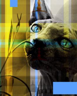 Cat Dark