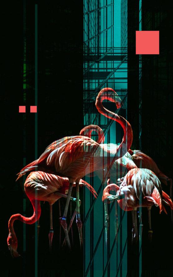 Flamingo Dark