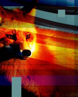 Fox Dark