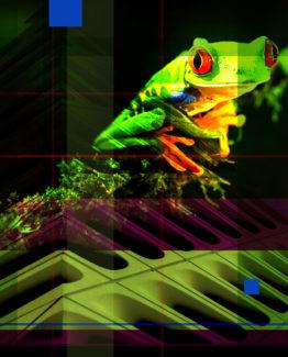 Frog Dark