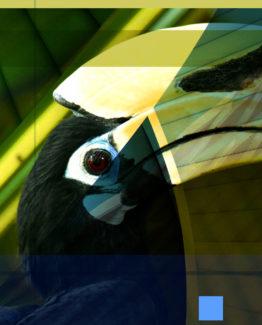 Hornbill Dark