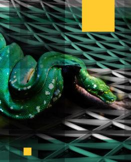 Snake Dark